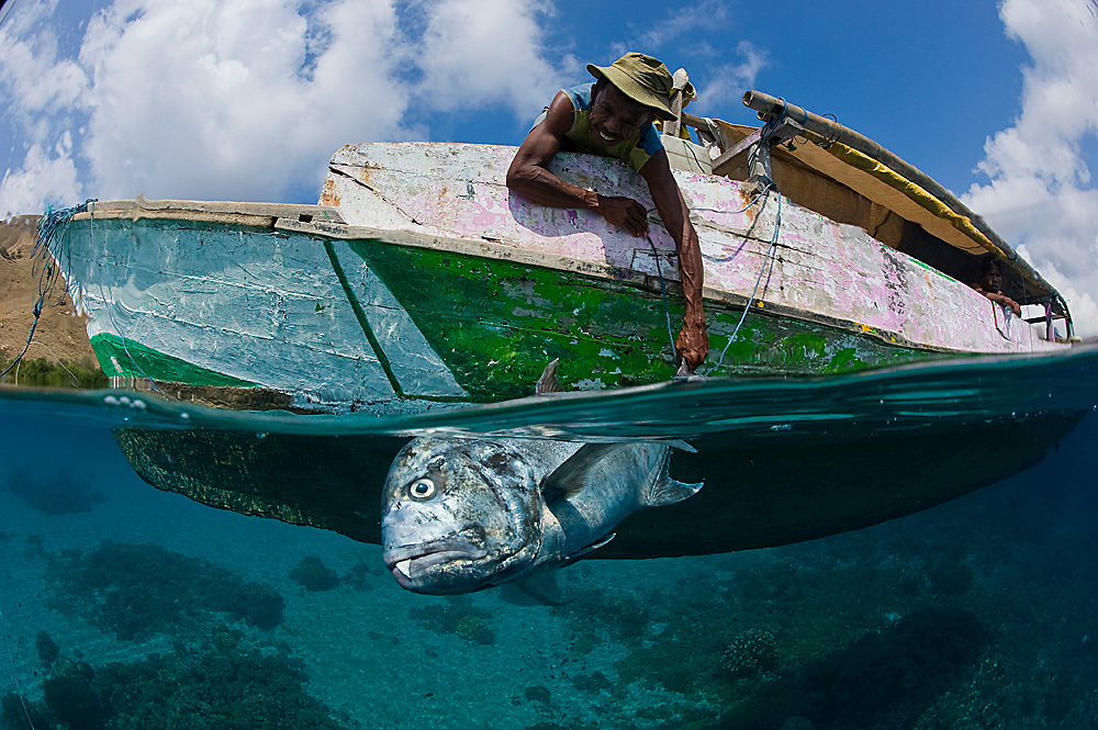 Despite officially protected, Komodo National Park in Indonesia is subject to illegal fishing. Here, a poacher proudly displays his prized catch, a giant trevally (Caranx ignobilis), an apex predator of the coral reef. Photo taken while snorkeling. Image available as a premium quality aluminum print ready to hang.