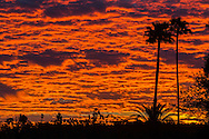 Palm trees are silhouetted against the morning sky with colors on clouds, Sunday, March. 9, 2014, in Los Angeles, California. (Photo by Ringo Chiu/PHOTOFORMULA.com)