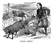 """Black Sheep."""