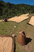 Drying grain<br /> Adi Gallong Tribe<br /> Arunachal Pradesh<br /> North East India