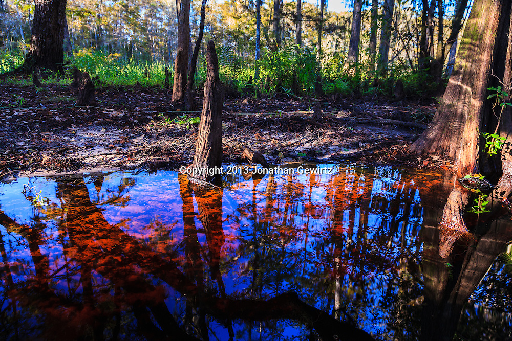 Tannin-colored reddish water in scenic Fisheating Creek, Florida. WATERMARKS WILL NOT APPEAR ON PRINTS OR LICENSED IMAGES.