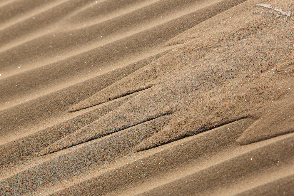 Disturbed sand flows down channels on the side of a sand dune. Mesquite Dunes, Death Valley, California.