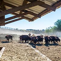 Walchli Farms in Hermiston, Oregon