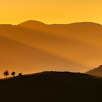 Two trees on a mountain hill shined by golden sunlight