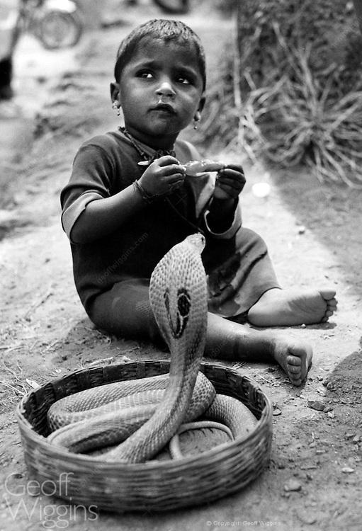 Child with cobra rising from snake charmer's basket. Maharashtra, India 1998