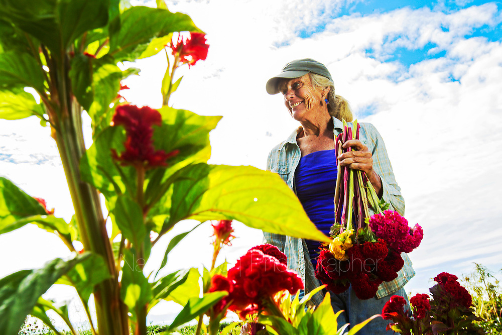 Tending to flowers at Harvest Moon Flower Farm in Spencer, Ind. on Monday, July 23, 2018.