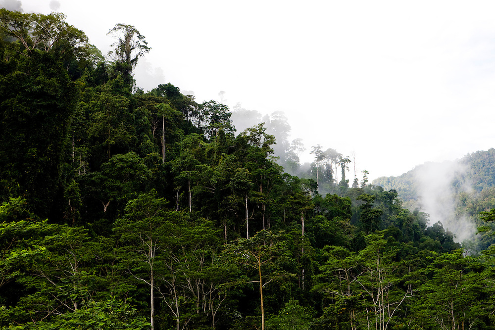 Fog conceals much of the rainforest on the slopes of the Kebar Mountains near Manokwari, Papua, Indonesia, Sept. 12, 2008..Daniel Beltra/Greenpeace