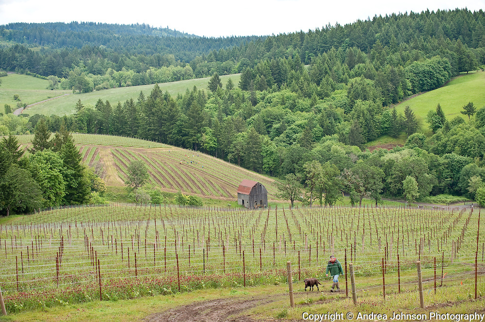 Colene Clemens vineyard, Yamhill-Carlton AVA, Willamette Valley, Oregon