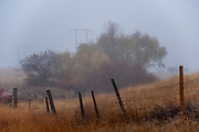 Early morning walk in the fog on Old Freight Road with Sugar on the way to Missoula for an assignment for the NY Times.