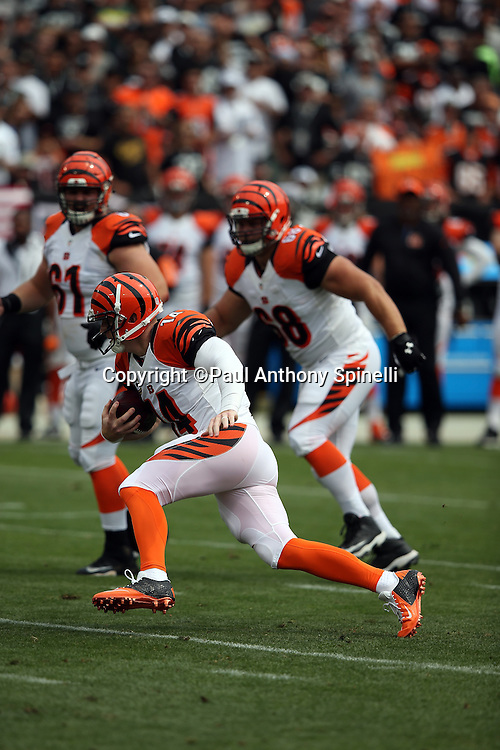 Cincinnati Bengals quarterback Andy Dalton (14) scrambles on the Bengals first drive in the first quarter during the 2015 NFL week 1 regular season football game against the Oakland Raiders on Sunday, Sept. 13, 2015 in Oakland, Calif. The Bengals won the game 33-13. (©Paul Anthony Spinelli)