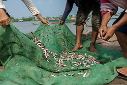 October 25, 2013 - Kompong Loung Commune (Kandal). Fishermen clean tiny fishes that are used to make prohok, a popular local fermented fish paste.  © Thomas Cristofoletti / Ruom