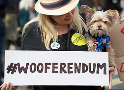 """© Licensed to London News Pictures. 07/10/2018. London, UK. Teddy is held by his owner during the 'Wooferendum' march and rally to Parliament Square to demand a """"People's Vote"""" on the final Brexit agreement.  Photo credit: Peter Macdiarmid/LNP"""