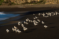 090-P98514<br /> <br /> Greenwood State Beach<br /> &copy;2018, California State Parks.<br /> Photo by Brian Baer