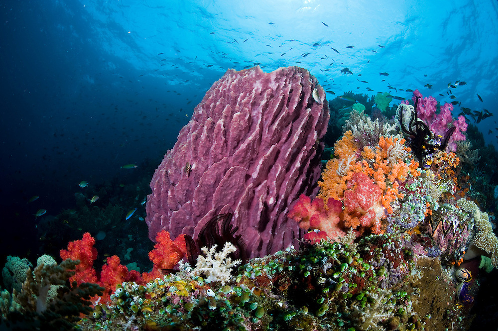 Coral reefs and mangroves in Raja Ampat
