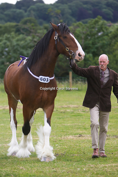 Messrs B &amp; D Lowrie  Bay Gelding  f  2006  Upperfoot Sir Selwyn<br /> Sire - Harwood's Commander<br /> Dam - Lancashire Lady Second<br /> Bred by Mr R A Wheelwright   Cragg Vale, Halifax, Yorkshire