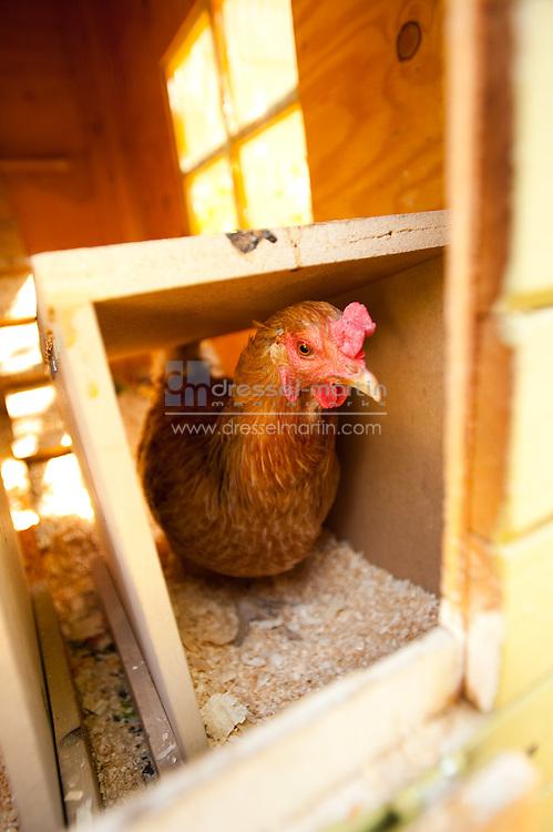 2010 Chicken Coop Tour
