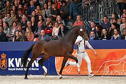 310, Kojack<br /> KWPN Stallionshow - 's Hertogenbosch 2018<br /> © Hippo Foto - Dirk Caremans<br /> 03/02/2018