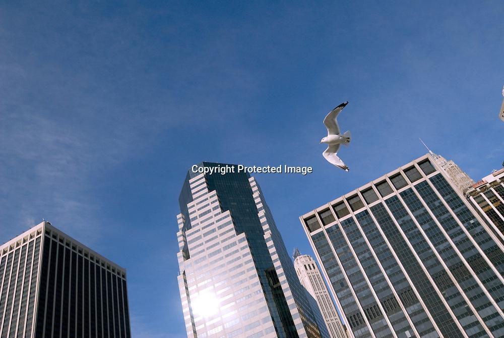 A sea gull in Manhattan, Financial District