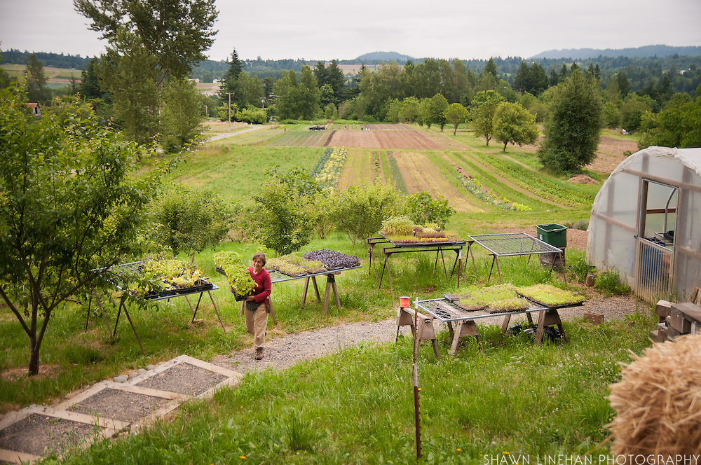 Shari Sirkin of Dancing Roots Farm in Troutdale, Oregon.