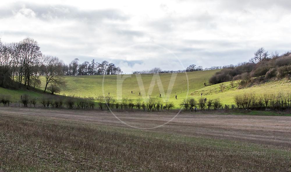 Weston Estate Shoot  26th January 2019