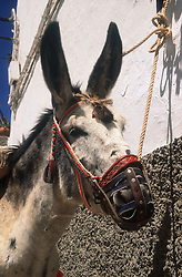Donkey tethered outside a house in Ardales; Andalucia,