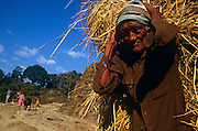 With a dark, weathered face, an elderly man carries a harvest of straw on his back - a traditional way of bringing in the harvested - in the Himalayan kingdom of Nepal. The man is close to the viewer, looking directly at us while other members of his community appear around a bend. Agriculture accounts for about 40% of Nepal's GDP, services comprise 41% and industry 22%. Agriculture employs 76% of the workforce, services 18% and manufacturing/craft-based industry 6%. Agricultural produce -- mostly grown in the Terai region bordering India -- includes tea, rice, corn, wheat, sugarcane, root crops, milk, and water buffalo meat. Industry mainly involves the processing of agricultural produce, including jute, sugarcane, tobacco, and grain.