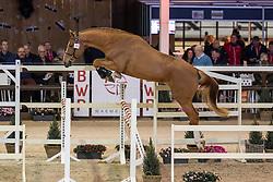 109, Levall<br /> Hengstenkeuring BWP - Lier 2019<br /> © Hippo Foto - Dirk Caremans<br /> 18/01/2019