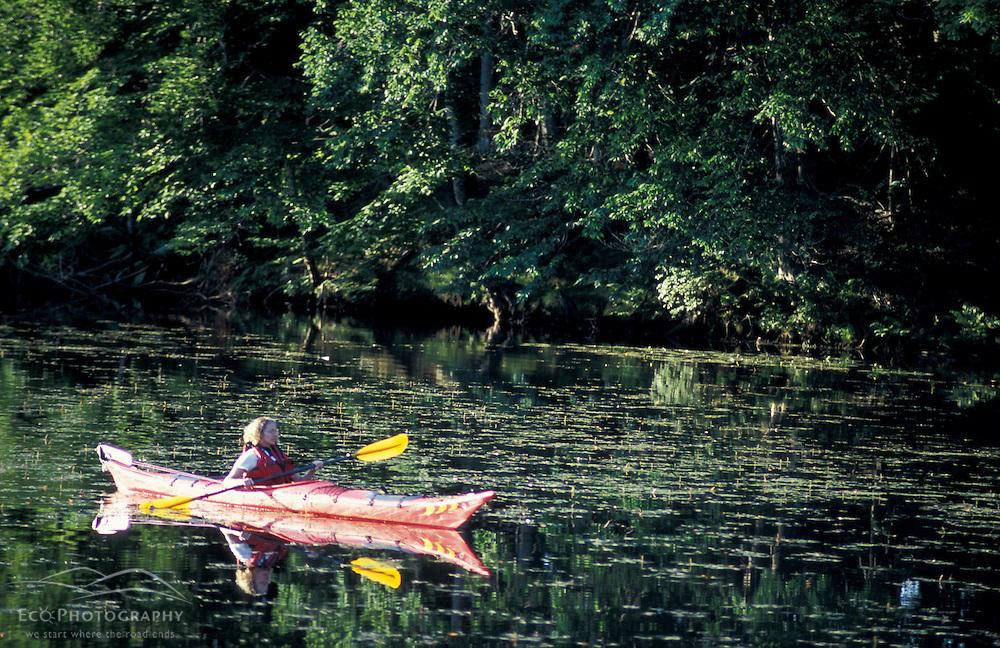 Hampton, NH.Kayaking on the Taylor River where it flows through the Hurd Farm in Hampton, New Hampshire.
