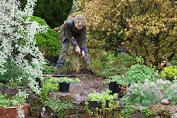Carol Klein pulling up cotoneaster to make room for other sun loving plants