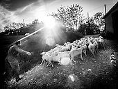 Farmer Italy