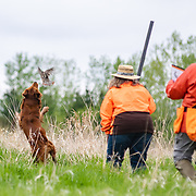 Photography was made during the 2018 Randy Cooley Hunt Test, on May 20, 2018, at the Master field.  The test took place at Rock River Kennels, in Beaver Dam, WI.  Diffuse light in the morning. The sun came out in time for water work, both days.