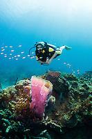A diver explores a Purple Vase Sponge, St. Lucia.