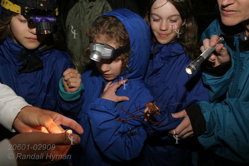 Ecoteach kids examine insects during night hike in cloud forest of Monteverde, Costa Rica.