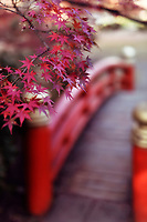 Beautiful autumn scenery of maple tree leaves and a vermilion red arched Japanese bridge in a garden in Kyoto, Japan