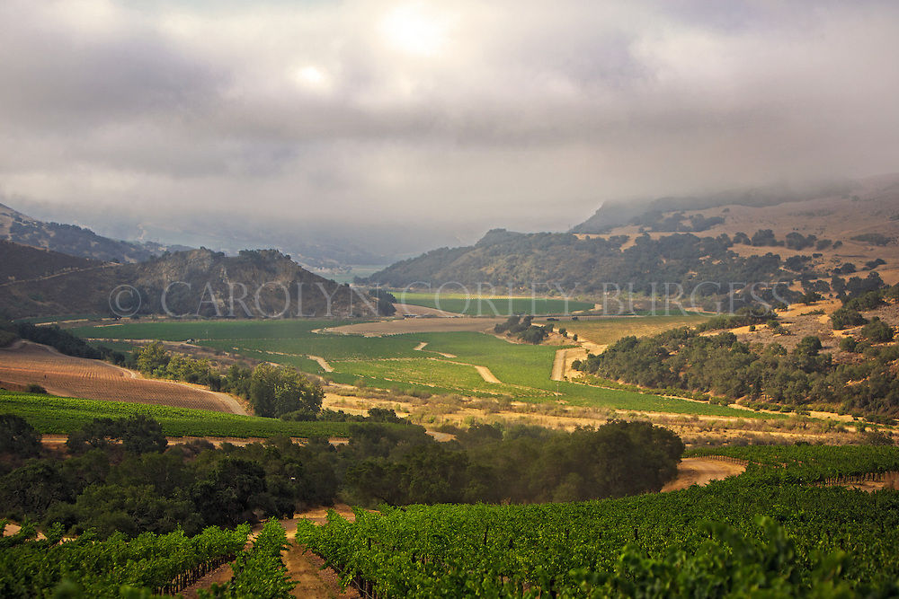 Foggy sunrise over Treasury Wine Estates North Canyon vineyard in Santa Maria.