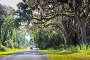 Country road lined with moss covered oak trees in Micanopy, a town in the north central region of Alachua County in Florida.