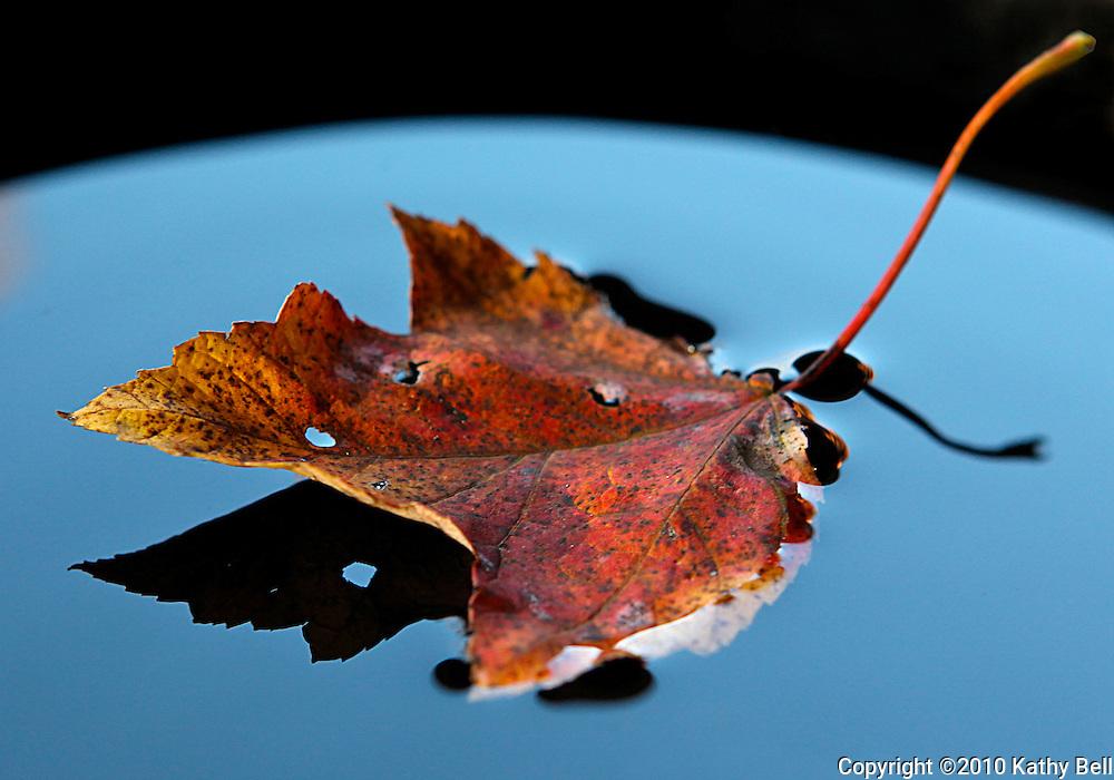 Image of a leaf reflection