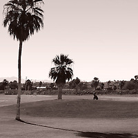 A golf course with a hilly lawn in a Mediterranean climate with palm trees.