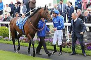 HARRY ANGEL getting mounted  by jockey Adam Kirby before winning the The Group 2 Duke Of York Clipper Logistics Stakes over 6f (£125,000) at the York Dante Meeting at York Racecourse, York, United Kingdom on 16 May 2018. Picture by Mick Atkins.