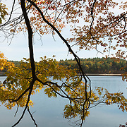 Walden Pond with fall colors. Near the site of Thoreau's rustic cabin. Concord, MA