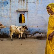A woman in a yellow sari walks in front of the blue wall.