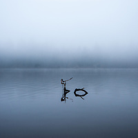 Branches protruding from a misty fog covered lagoon in early morning light.