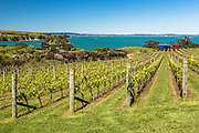 Coastal vineyards on Waiheke Island, near Auckland, New Zealand.
