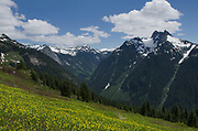 Mount Sefrit and Ruth Creek Valley, North Cascades Washington. Yellow Avalanche Lilies (Erythronium grandiflorum) are in the foreground)
