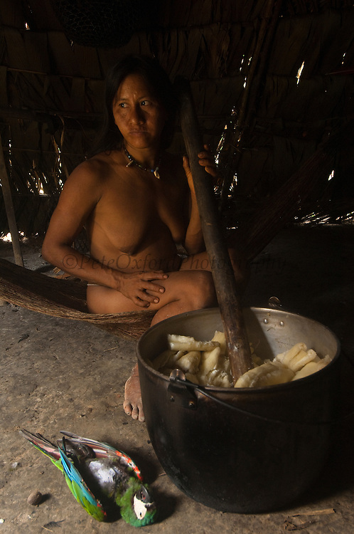 Huaorani Indian, Ewa Kemperi with macaw hunted for the pot.<br /> Bameno Community. Yasuni National Park.<br /> Amazon rainforest, ECUADOR.  South America<br /> This Indian tribe were basically uncontacted until 1956 when missionaries from the Summer Institute of Linguistics made contact with them. However there are still some groups from the tribe that remain uncontacted.  They are known as the Tagaeri &amp; Taromenane. Traditionally these Indians were very hostile and killed many people who tried to enter into their territory. Their territory is in the Yasuni National Park which is now also being exploited for oil.