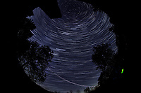 Star Trails looking Up (00:30-01:29). Composite of images  taken with a Nikon D850 camera and 8-15 mm fisheye lens (ISO 800, 10 mm, f/5.6, 30 sec)