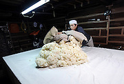 (FILE) A brewery staff hand spreads out rice on a table in a hot room where a mold is added to kill starch during the brewing process of sake, a wine-like beverage fermented from rice, water, yeast and a starch-killing mold called koji-kin, at a sake brewery in Kyoto, Japan. More than 1,200 sake breweries exist in Japan, though falling domestic consumption has lead some to look to  overseas markets...Photographer: Robert Gilhooly