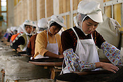 Anxi, China - 23 October 2004 - A woman sorts tea leaves in a factory that claims to give employment to women in Anxi, where the ratio of men to women has been serious affected by selective abortions and other factors.