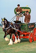 Shire horse towing traditional Ind Coope beer wagon at rural event  in Windsor, Berkshire, England, UK