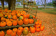 Pumpkins at harvest on old wagon in farm yard<br /> Pusclinch<br /> Ontario<br /> Canada